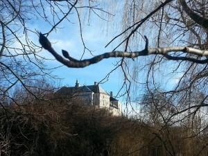 Slottet Olesko skymtar bakom grenarna.